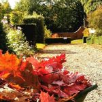 Autumn leaves - front page